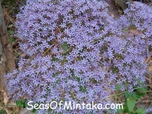 Purple Spiritual Flowers