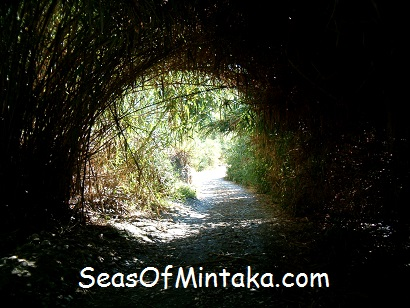 Tunnel Into a Sect